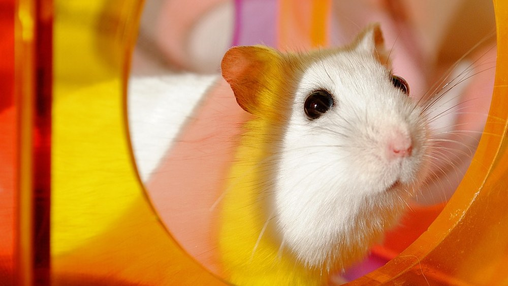 are hamster balls safe featured image.